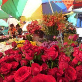 PHILIPPINEN REISEN BLOG - Bunte Schnittblumen für alle Gelegenheiten Foto: Sir Dieter Sokoll KR