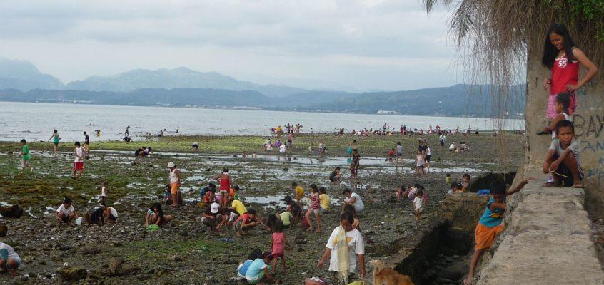 Muschelsuche bei Ebbe auf den Philippinen