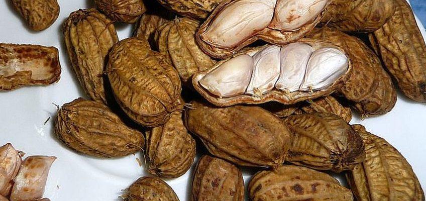 PHILIPPINEN REISEN BLOG - Gekochte Erdnüsse Foto: Sir Dieter Sokoll KR