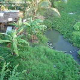 PHILIPPINEN REISEN BLOG - Kangkong-Wasserspinat Felder Foto: Sir Dieter Sokoll KR
