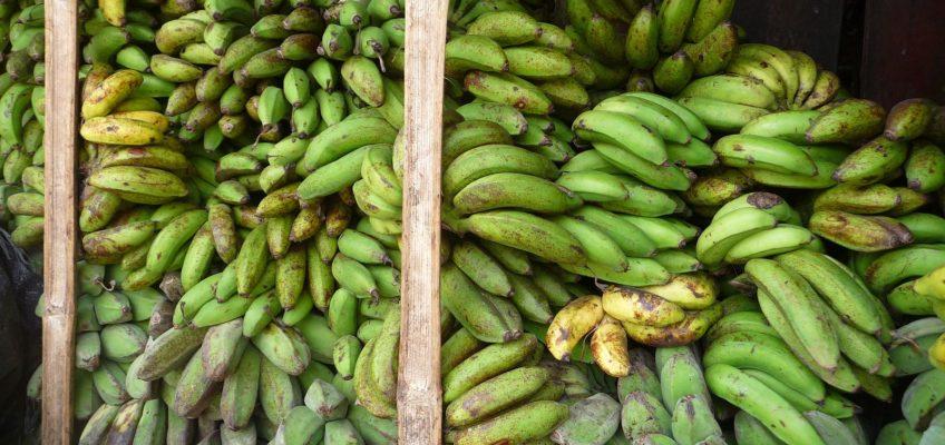 PHILIPPINEN REISEN - Alles Banane? Die Cavendish Bananen auf dem Markt