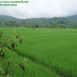 PHILIPPINEN REISEN BLOG - Reisfelder Foto: Sir Dieter Sokoll KR