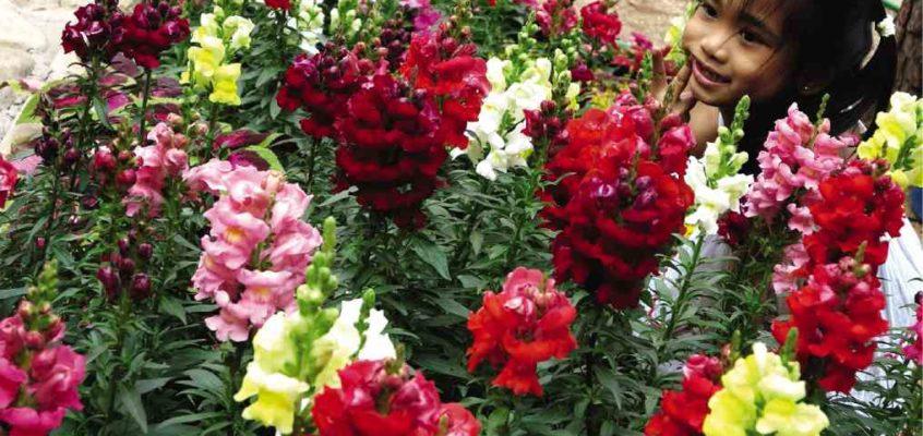 Harrison Road in Baguio ständiger Blumenmarkt