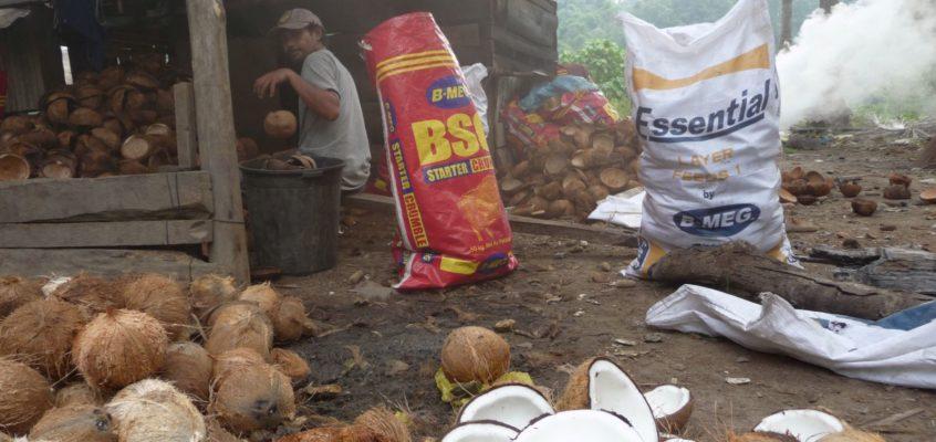 Kokosnuss trocknen