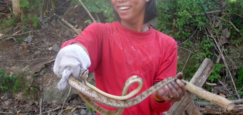 Schlangen ums Haus