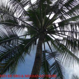 Philippinen Reisen Blog - Mario macht Palmwein und Palmessig