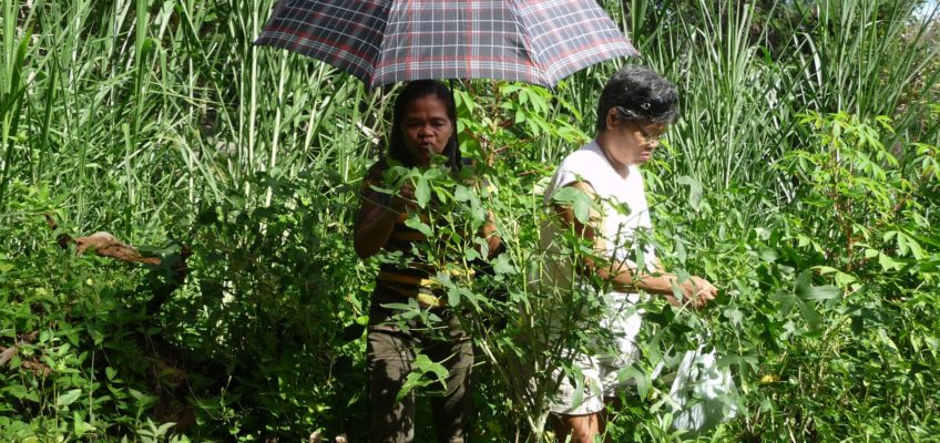 Philippinen Kräutergarten Gemüsegarten