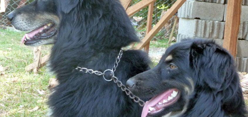 Leben mit unseren Hunden in den Philippinen