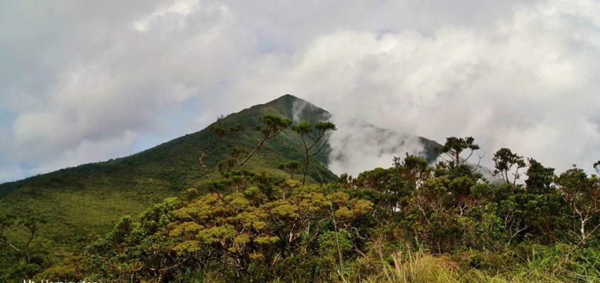 Der Pygmäenwald in Davao Oriental