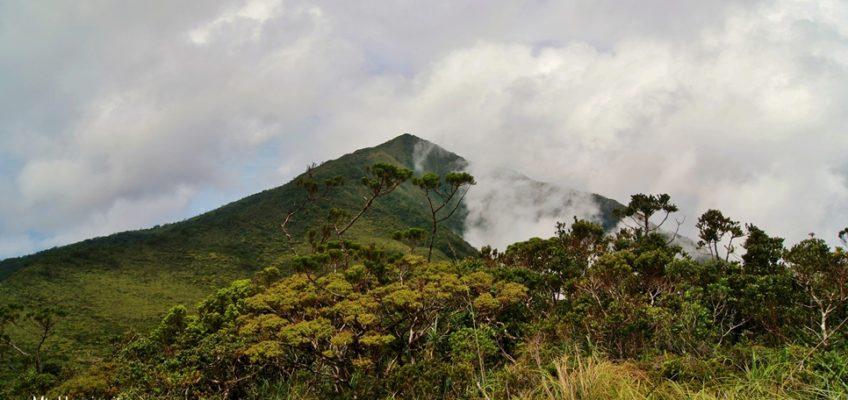 PHILIPPINEN REISEN BLOG - Der Pygmäenwald in San Isidro, Davao Oriental
