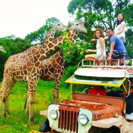 PHILIPPINEN REISEN BLOG - Calauit Safari Park in Palawan