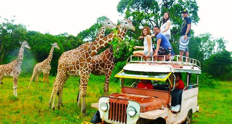 Philippinisch-afrikanische Safari