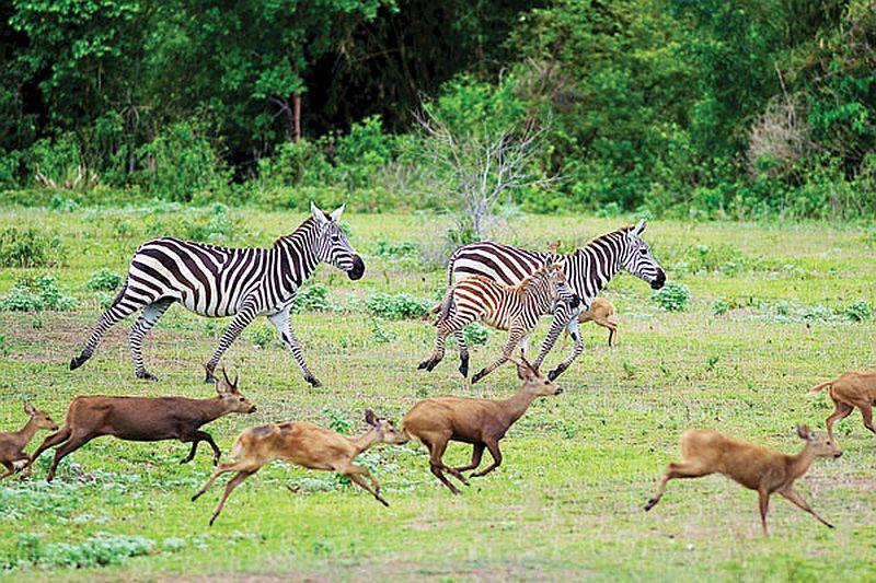 FREIZEIT: Afrikanische Safari in Calauit