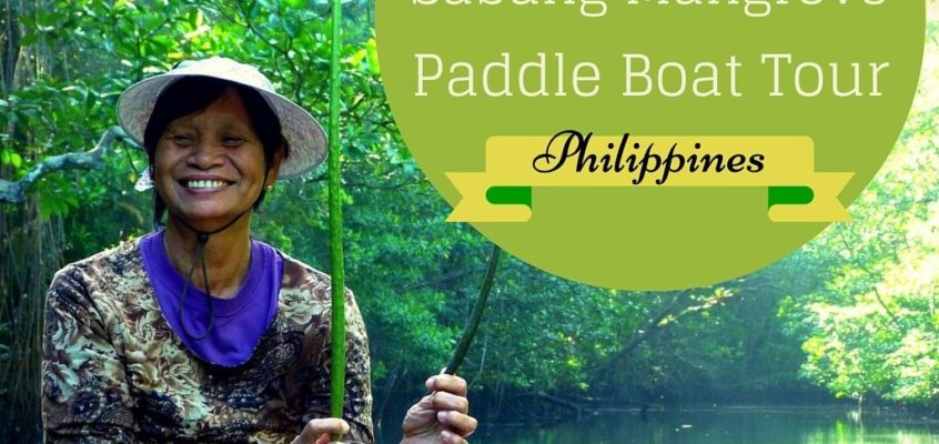 Die Paddelboot-Tour durch die Mangroven