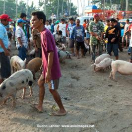 PHILIPPINEN REISEN BLOG - Ein Tag auf dem Markt von Malatapay