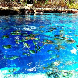 PHILIPPINEN REISEN BLOG - Reisewunsch Enchanted River in Hinatuan