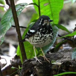 Philippinen Reisen Blog - Vogelbeobachtung im La Mesa Ecopark