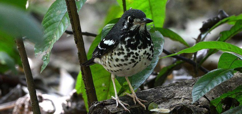 Gesichtet: Einheimische Vogelart im La Mesa Ecopark
