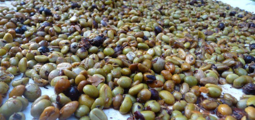 Philippinen Reisen Blog Wir machen unseren Kaffee selber