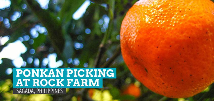 Orangen pflücken in Sagada