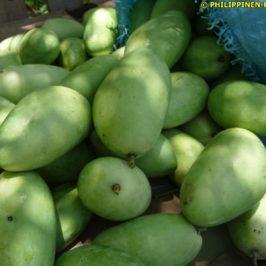 PHILIPPINEN REISEN BLOG - Mango - Von der Fruchtbildung zur Ernte - I