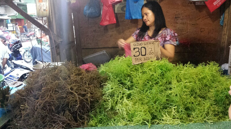 PHILIPPINEN REISEN BLOG - Guso - Seetang aus Tawi-Tawi