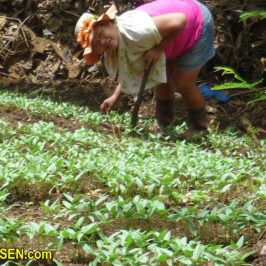 PHILIPPINEN REISEN BLOG - Bei uns zu Hause im Garten