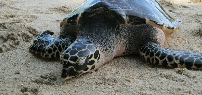 Keine Eile auf der Schildkröteninsel