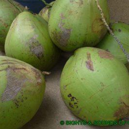 PHILIPPINEN BLOG - Labog Bugtong und Ice Candy mit Kokosnüssen Foto: Sir Dieter Sokoll KR
