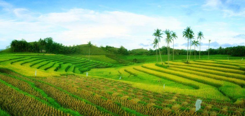 Die Cadapdapan Reisterrassen von Bohol