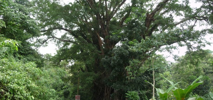 PHILIPPINEN REISEN BLOG - Wildpflanzen für den Wildgarten Foto: Sir Dieter Sokoll KR