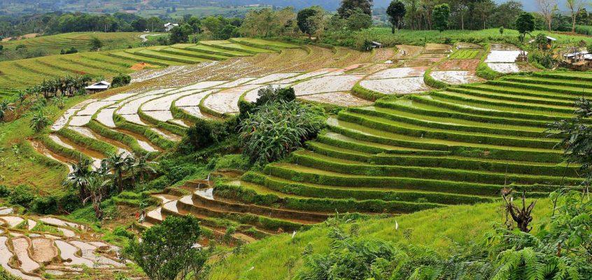 Die Reisterrassen von Codcod