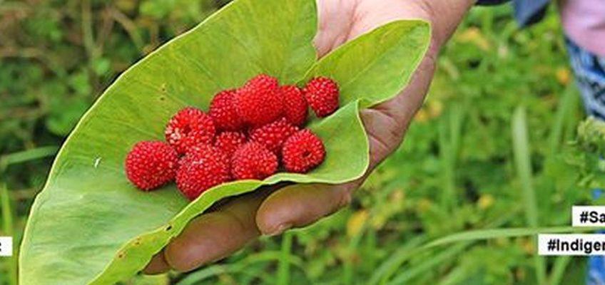 PHILIPPINEN REISEN BLOG - SERIE - Seltene Früchte - SapinitPHILIPPINEN REISEN BLOG - SERIE - Seltene Früchte - Sapinit
