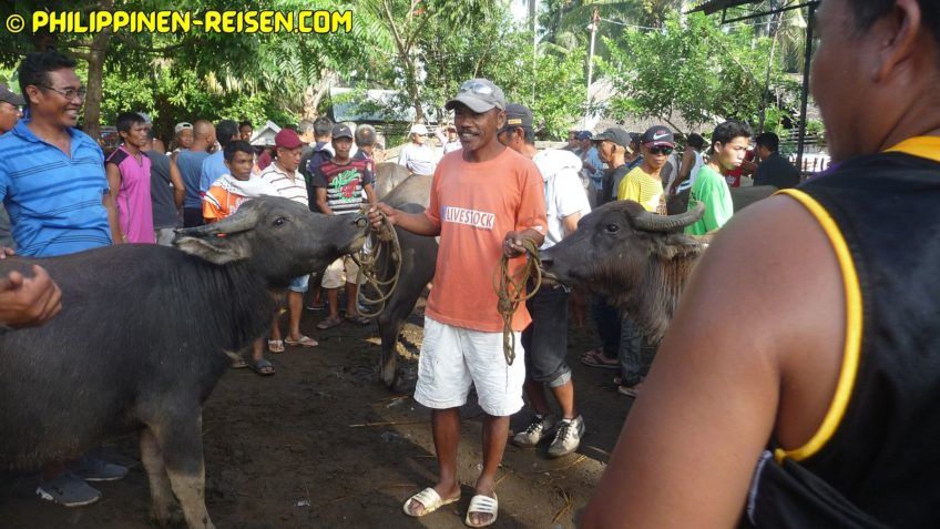 PHILIPPINEN REISEN BLOG - Malatapay Markt - Auf dem Viehmakrkt Foto von Sir Dieter Sokoll