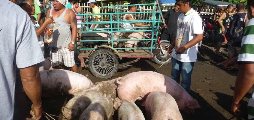 Malatapay Markt – Auf dem Viehmarkt