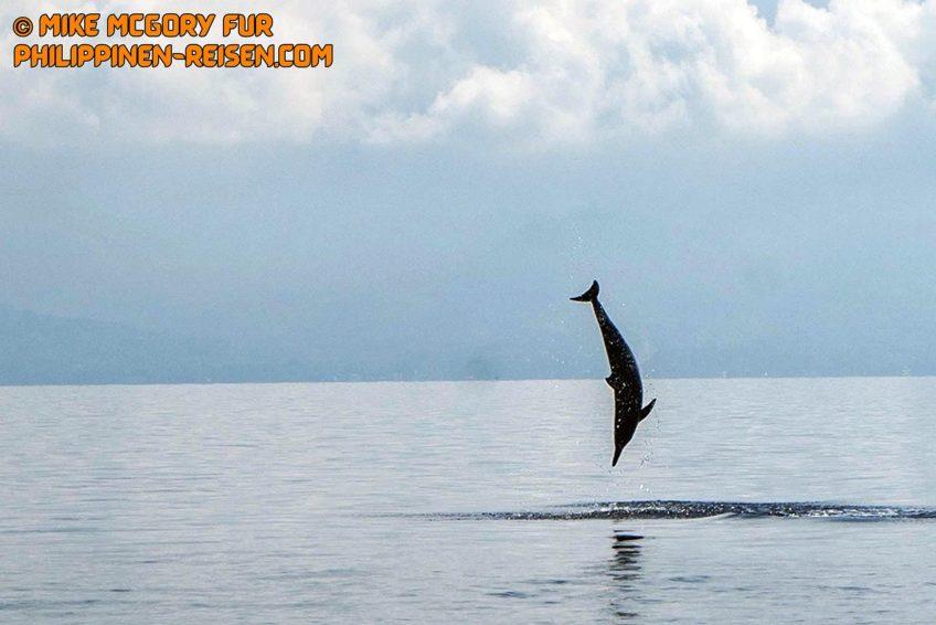 PHILIPPINEN REISEN BLOG - Tagesausflug zu den Delphinen und Sandbänken von Bais Foto von Sir Dieter Sokoll