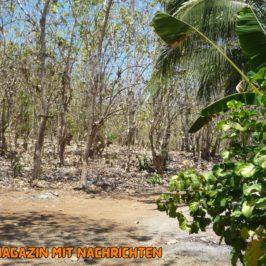 PHILIPPINEN REISEN BLOG - BEI UNS ZU HAUSE: Trockenzeit wie jedes Jahr Foto von Sir Dieter Sokoll für PHILIPPINEN MAGAZIN