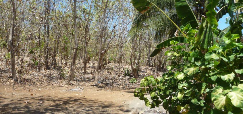 BEI UNS ZU HAUSE: Trockenzeit wie jedes Jahr