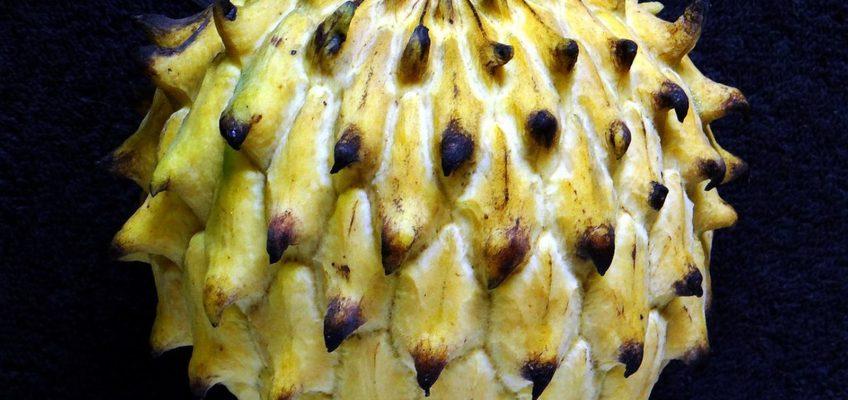 PHILIPPINEN BLOG - Unbekannte Früchte - Biriba