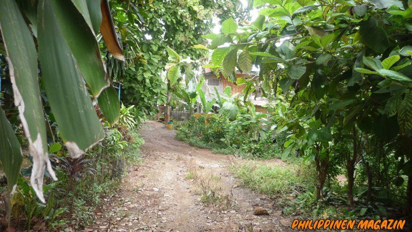 PHILIPPINEN BLOG - Nachschub für den Dschungel-Blumengarten Foto von Sir Dieter Sokoll für Philippinen Magazin