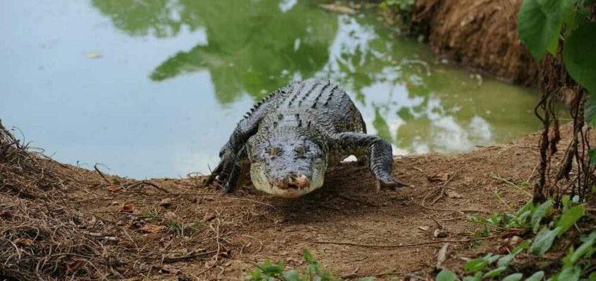 Lolongs größerer Großvater in Laguna getötet
