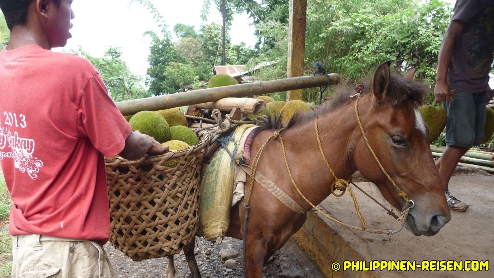 PHILIPPINEN BLOG - Vorher und nachher in den Bergen von Balingasag Foto von Sir Dieter Sokoll für PHILIPPINEN MAGAZIN