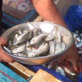 PHILIPPINEN BLOG - Der mobile Fischhändler kommt täglich Foto von Sir Dieter Sokoll für PHILIPPINEN MAGAZIN