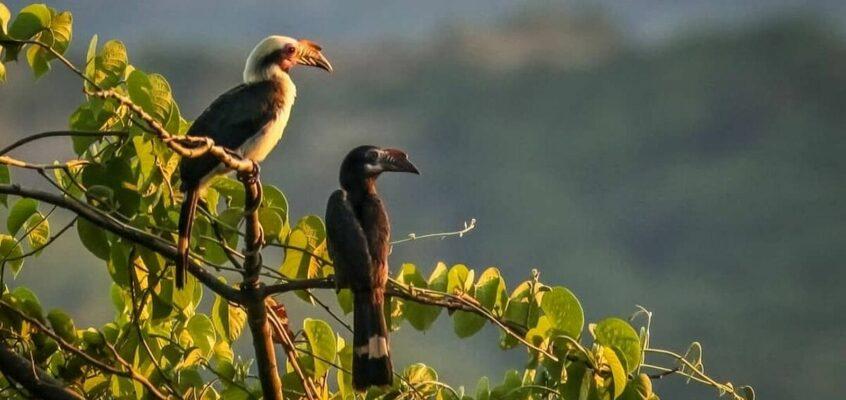 Seltene endemische Wildtiere gedeihen im Masungi Georeserve